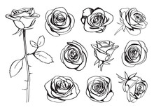 Roses Hand Drawn Set. Black Line Rose Flowers Inflorescence Silhouettes Isolated On White Background. Icon Collection. Vector Doodle Illustration