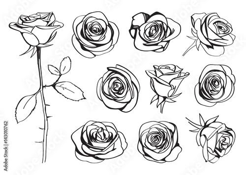 Roses hand drawn set Wallpaper Mural