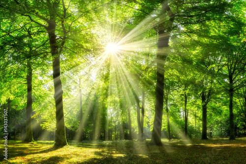 Fotobehang Bossen Grüner Wald im Sommer