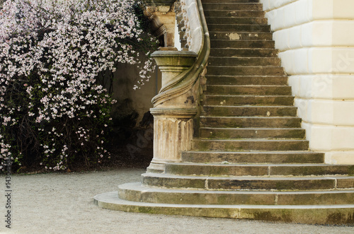 Staircase of a castle in Prague with blossoming tree