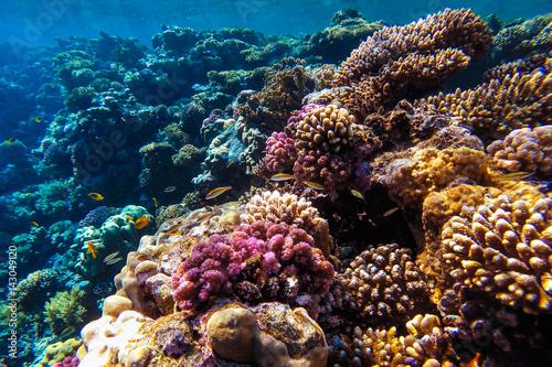 Staande foto Koraalriffen red sea underwater coral reef