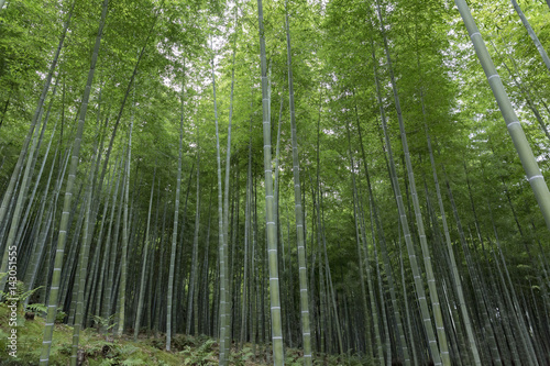 Foto op Plexiglas Bamboe Bamboo trees