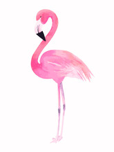 Watercolor Pink Flamingo. Vect...