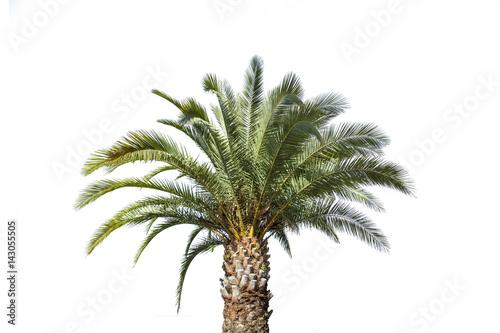 Papiers peints Palmier Einzelne Palme Freisteller