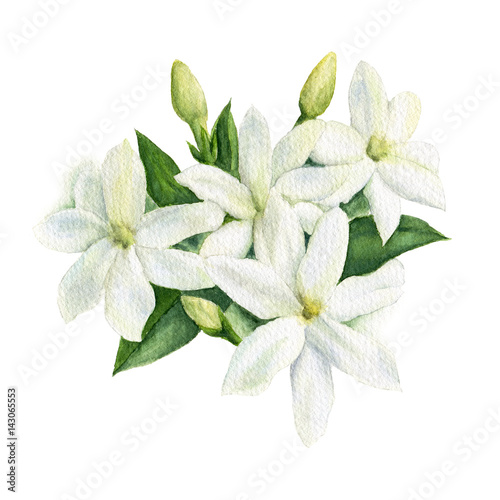 Photo  Watercolor illustration of white Jasmine flowers with leaves and buds