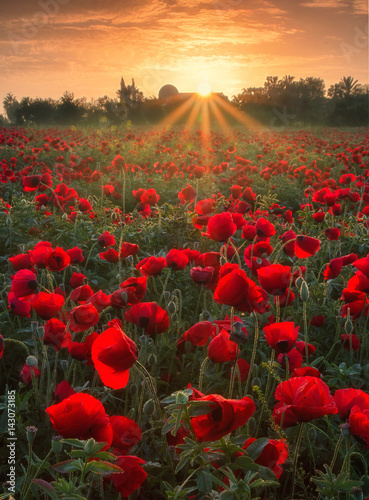 Canvas Prints Poppy Poppies in Sunrise