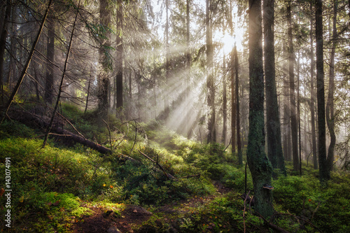 Fotobehang Bossen Old magical autumn forest with sun rays.