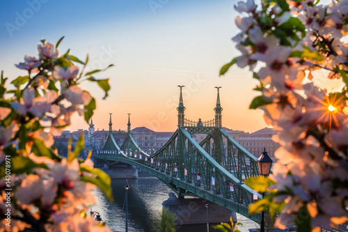 Budapest Budapest, Hungary - Beautiful Liberty Bridge at sunrise with cherry blossom and morning sun. Spring has arrived in Budapest.