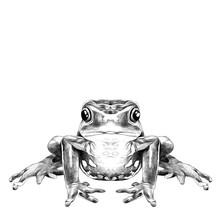 The Frog Sits Symmetrical Sket...