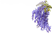 Wisteria Flowers Floral Design...