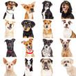 Multiple Crossbreed Dog Closeups