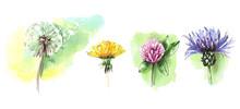 Watercolor Floral Elements Set...