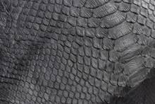 Reptile Snake Texture Closeup,...