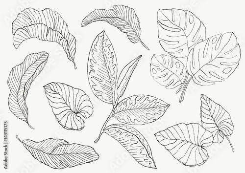Fototapeta Set Leaf. Exotics. Vintage vector botanical illustration. obraz na płótnie