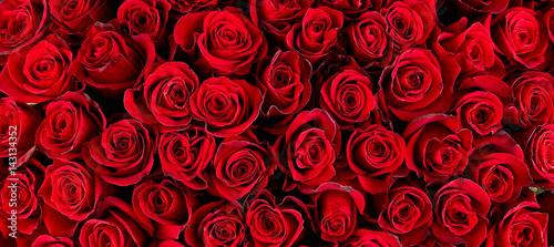 Recess Fitting Roses Natural red roses background