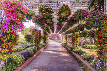Flower Tunnel Arch In The Summer