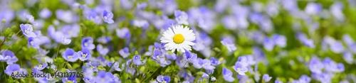 kolorowa-laka-kwiatowa-na-wi