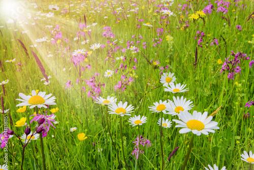 kolorowa-kwiat-laka-w-wiosnie-i-sunbeams