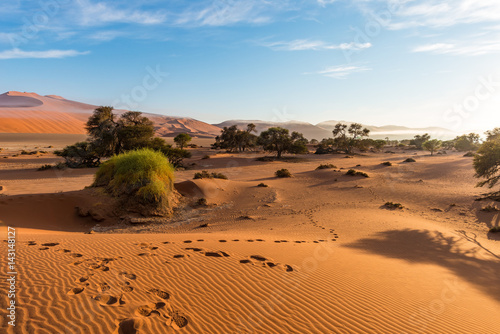 Fotografie, Obraz  The scenic Sossusvlei, clay and salt pan with braided Acacia trees surrounded by majestic sand dunes