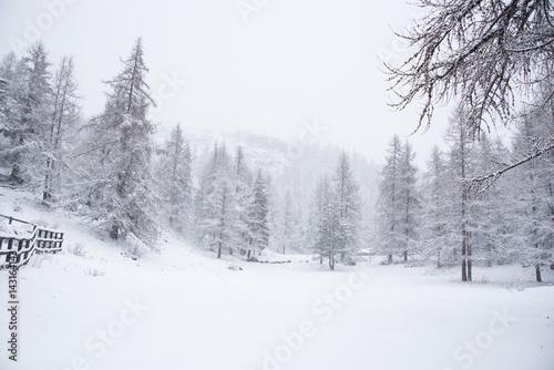 Fotografía  bianca foresta durante una nevicata in montagna
