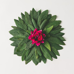Fototapeta Minimalistyczny Creative minimal arrangement of green leaves and pink rose flower. Nature concept. Flat lay.