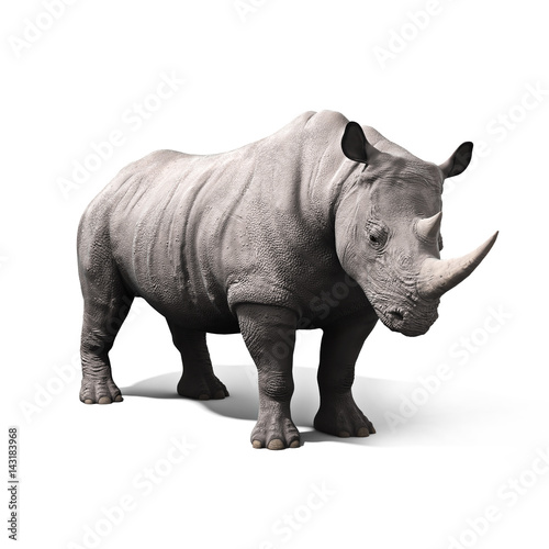 Fényképezés  Rhinoceros isolated on a white background. 3d rendering