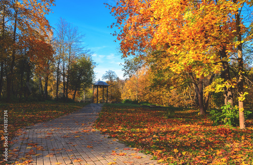 Foto op Canvas Herfst Autumn park