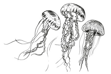 Fototapeta Hand drawn jellyfish. Vector illustration. Sea collection.