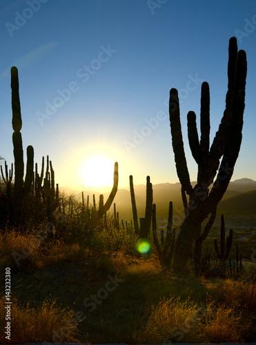 Papiers peints Cactus Sunrise in the desert
