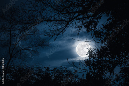Foto op Plexiglas Nacht Silhouettes of dry tree against sky and beautiful super moon. Outdoor.