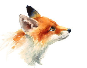 Fototapeta Watercolor Wild Animal Red Fox Looking Up Side View Hand Drawn Portrait Illustration isolated on white background