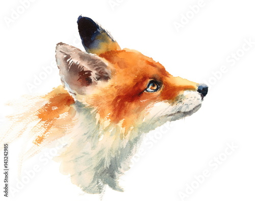 Watercolor Wild Animal Red Fox Looking Up Side View Hand Drawn Portrait Illustra Wallpaper Mural