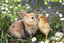 Best Friends Bunny Rabbit And ...