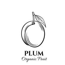 Hand Drawn Plum Icon.