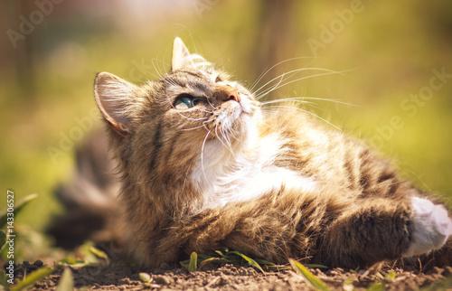Naklejki koty   portret-kota-ktory-rozkoszuje-sie-sloncem