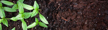 Young Green Seedlings Plants G...