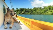 Dog Enjoying A Boat Ride