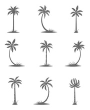 Black Silhouettes Of Palm Trees.