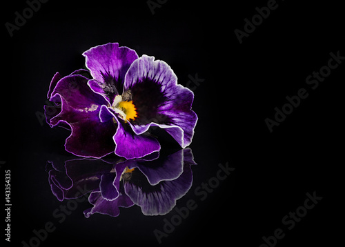Papiers peints Pansies Pansy flowers isolated on black