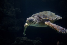 Turtle Portrait