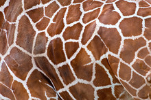 Close View Of Of Brown Spots O...