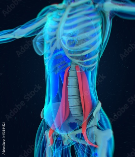 Female psoas muscle Fototapet