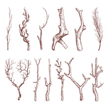 Sketch Wood Twigs, Broken Tree Branches Vector Set