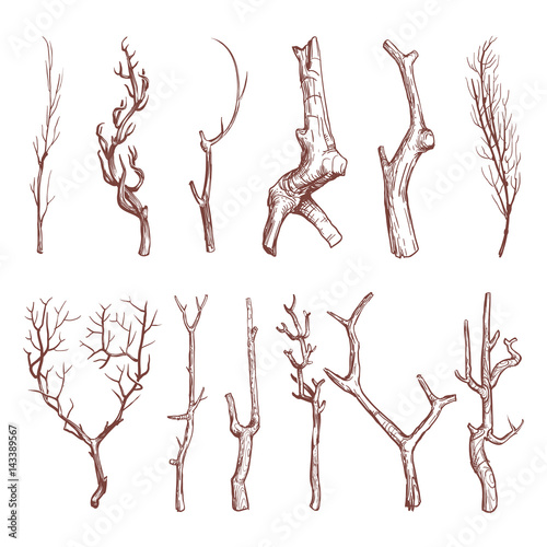 Tablou Canvas Sketch wood twigs, broken tree branches vector set