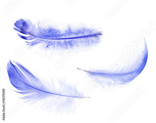 set of light blue isolated feathers