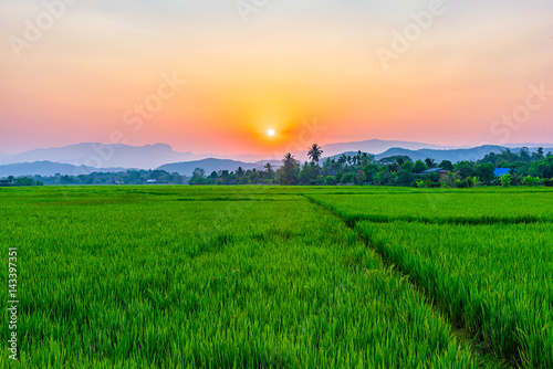 Deurstickers Groene Rice field Mae Kon at sunset in Chiang Rai,Thailand