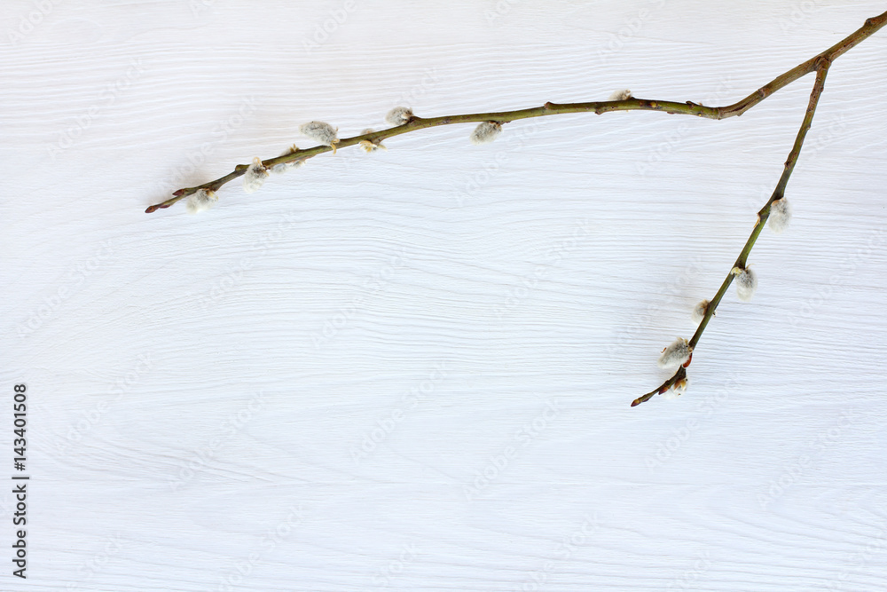 eebenpuu amuture