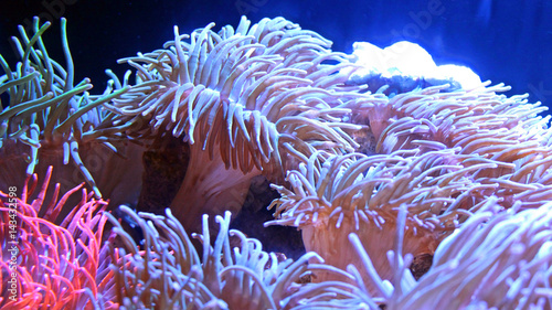 Poster Waterlelies Glowing Natural Coral Reef