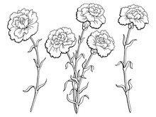 Carnation Flower Graphic Black...