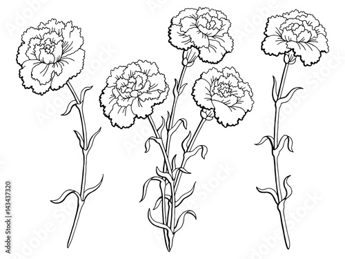 Photo Carnation flower graphic black white isolated sketch illustration vector